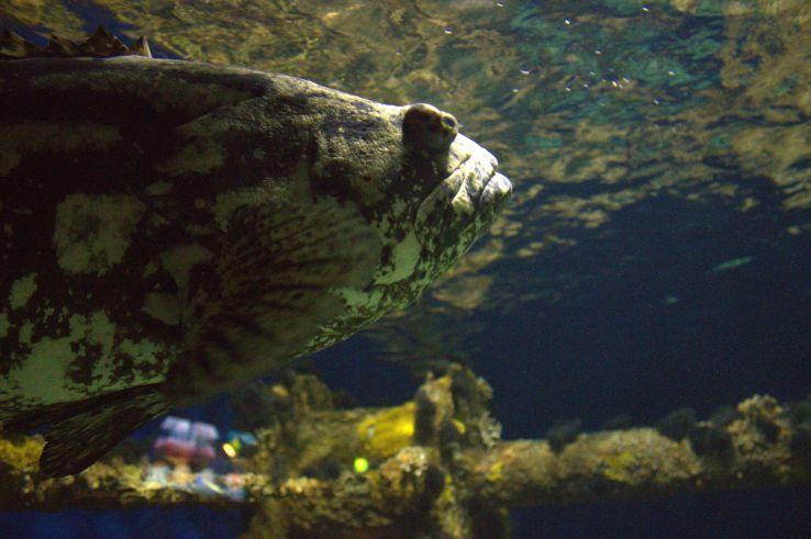 Aquarium08-13-201403
