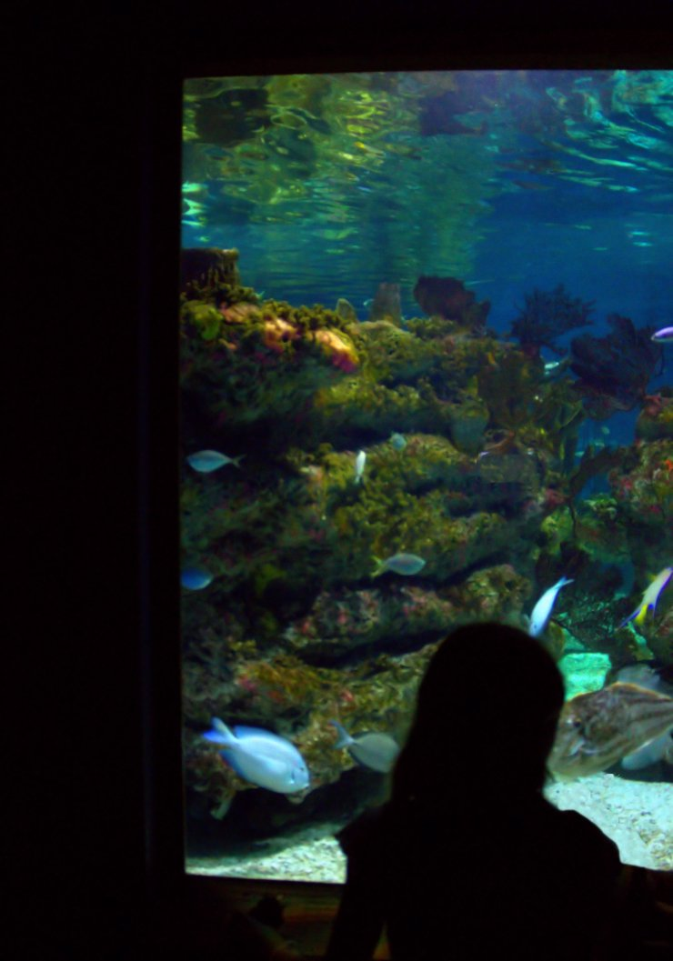 Aquarium08-13-201405