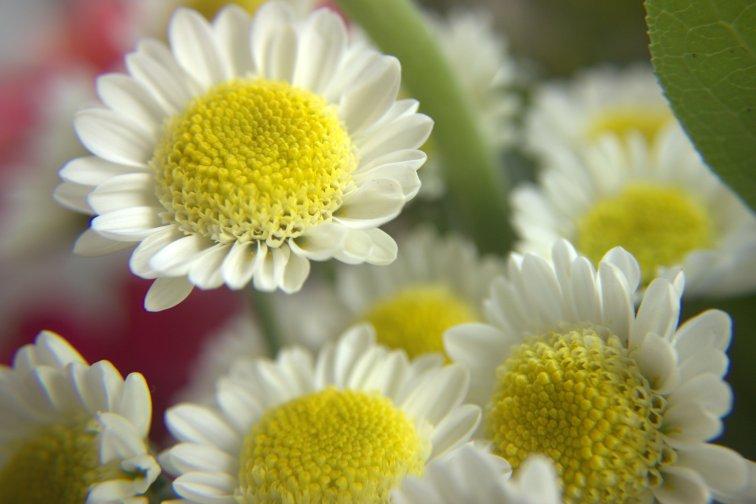 Flowers-08-24-201401